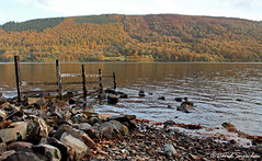 Coniston Water (Dave Snowdon (Wipeout Dave)) Tags: davidsnowdonphotography canoneos1100d landscape lakedistrict lakedistrictnationalpark lakeland autumn fall conistonwater water lake trees fence