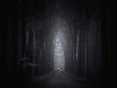 Tales and dreams are the shadow truths (soleá) Tags: anticipating suspension suspenseful darkphotography darkness soleá carmengonzález gothic blackandwhite thriller mystery car aforest forest trees