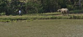 INDONESIEN , Sulawesi, Im Norden, Landwirtschaft, 17668/10681