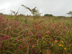 DSCN5609 (norwin_galdiar) Tags: bretagne brittany breizh finistere monts darrée nature landscape paysage