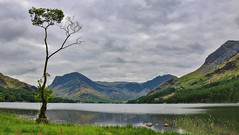It was only a matter of time.... [explored 22.08.18.] (mandysp8) Tags: uk buttermere thelakedistrict canon 750d lake thenationaltrust lonetree mountains summer earlymorning clouds reeds landscape