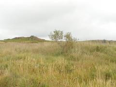 DSCN5616 (norwin_galdiar) Tags: bretagne brittany breizh finistere monts darrée nature landscape paysage