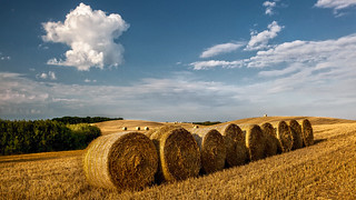 Harvest 01