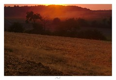 Reaped Landscape (Max Angelsburger) Tags: heckengäu gaulandschaft landscape tree glow dust crop harvest dry hot summer 2018 field