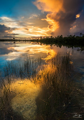 Pine Glades Lake Sunset (J.Coffman Photography) Tags: big cypress everglades national park landscape trees swamp water reflections florida united states forest marsh clouds nikon d810 hike hiking wilderness sunshine fl state preserve wet season
