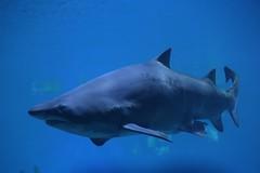 2018.08.17 Urlaub Mallorca (438c) Palma Aquarium (klemenshorst) Tags: mallorca delfin meer urlaub hai palma cala ratjada es caregador capdepera