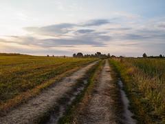 road among fields (Jack182_rus) Tags: m43 olympus em10ii leica summilux 15f17 landscape sunset field countryside