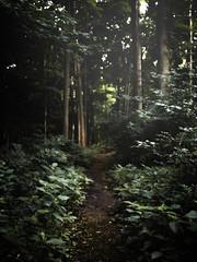 McDowell (patkelley3) Tags: path forest trees mist