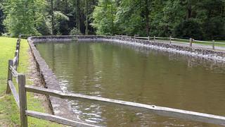 Fish Pond at Jones Gap
