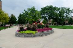 Indiana Wesleyan University Flowers (Bracus Triticum) Tags: indiana wesleyan university flowers marion マリオン インディアナ州 unitedstates usa アメリカ合衆国 アメリカ 8月 八月 葉月 hachigatsu hazuki leafmonth 2018 平成30年 summer august