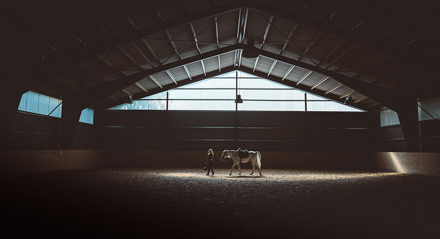 White arabian learning some new cues