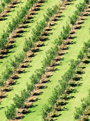 Earth from Above - Rows without Raw (Le.Patou) Tags: france périgord dordogne campagne paysage culture alignement ligne motif géométrie vert arbre land country contryside landscape crop alignment line row pattern geometry green tree fz1000 plaine lowland valley