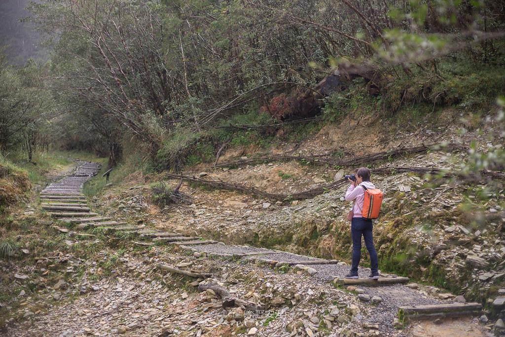 太平山翠峰湖環山步道 |走在泥濘的道路上,只為途中美景 | 宜蘭大同鄉17