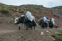 D4I_1535 (riccasergio) Tags: china cina tibet kailash xizangzizhiqu kora alidiqu cn