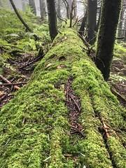 Fallen Tree (esywlkr) Tags: nature mtmitchellstatepark forest moss tree nc northcarolina