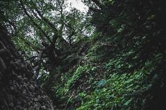 DSC_0058 (Hilðr) Tags: mountains trees rocks forest woods view horizon canyon hills pine stones moss norse inspiration spirit hiking dark
