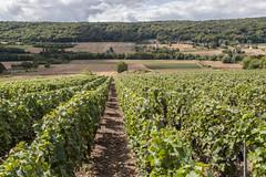 Marne Valley (ClydeHouse) Tags: champagne vineyard aisne passysurmarne reuillysauvigny byandrew vignoble france hautsdefrance