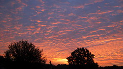 Sunrise on 09/13/2018 in the city of Lebedin. Ukraine. (ALEKSANDR RYBAK) Tags: восход рассвет утро солнечный свет лучи небо облака деревья природа атмосфера sunrise dawn morning solar shine beams sky clouds trees nature atmosphere sunset