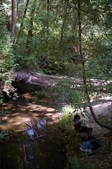 Scan-180919-0006 (alberthuynhphoto) Tags: big basin redwoods redwood state park 35mm fujifilm fuji superia 200 iso film nikon f3