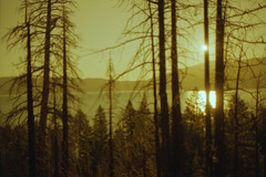 describe the sun using only shadows on the ground (m_travels) Tags: redscale reversesideofthefilm experimentalphotography film analog alternativeprocessing beach sunrise water lake trees mountains noedit dreamy mood science love poetry