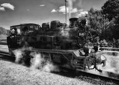 Rasender Roland - Dampflokomotive (hellrac3r) Tags: schwarzweis blackandwhite putbus germany locomotive steam dampflokomotive rasenderroland rügen