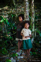 Beauties in the Jungle 3220 (Ursula in Aus - Travelling) Tags: jimclinephototour milnebay png papuanewguinea tawali