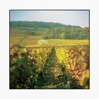 vineyards 8 • burgundy, france • 2017