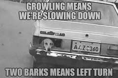 Dogs and Cars (partsavatar) Tags: cars autoparts carparts canada vancouver montreal toronto memes carmemes mechanichumor