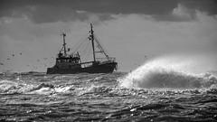 Fishing 1 (Drummerdelight) Tags: fishingboat seagulls seaside seascape blackwhite sea dof dehaan