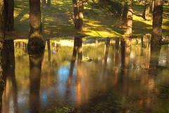 Reflejos en el Puerto de Canencia... (cienfuegos84) Tags: bosque forest agua water reflejos espejo arbol arboles tree trees verde green cienfuegos canencia