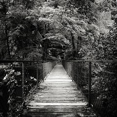 Bridge Of Forgivness (Missy Jussy) Tags: bridge bridgeofforgiveness boardwalk trees fence shadows light outdoor outside france southwestfrance mono monochrome blackwhite bw blackandwhite 24mm ef24mmf28 5d canon5dmarkll canon5d canoneos5dmarkii canon