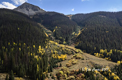 Evergreens and Aspens (Jan L. Curtis) Tags: autumn fall aspens sanjuanmountains