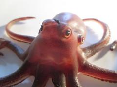 Giant Rubber Octopus Monster Sea Creature 7818 (Brechtbug) Tags: giant rubber octopus monster sea creature toy toys horror fright terror scary spooky figure action jigglers monsters halloween attack attacking squid ocean deep tentacle 2018 red purple sucker jiggler ben cooper smart