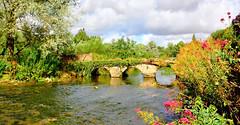 River Coln at Bibury (M McBey) Tags: bibury rivercoln gloucestershire england river stream bridge picturesque flowers trees waterway nikon d7100