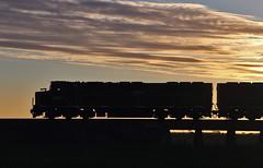 Korunye silhouette (Bingley Hall) Tags: australia southaustralia rail railway railroad transport train transportation trainspotting cclass emd 645e3 clydeengineering victorianrailways southernshorthaulrailroad ssr grain c510 railpage:class=21 railpage:loco=c510 rpauviccclass rpauviccclassc510 silhouette korunye