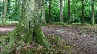 Beechwoods Nature Reserve...