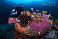 Colours explosion by the entrance of the Arch (Nicolas & Léna REMY) Tags: basspoint marinelife underwater ocean thearch sponge australia shellharbour wildlife nsw coral nauticam inon pacificocean corail diving mer photography plongée scuba sea wild éponge