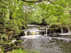 Down by the river, Ballintrillick, Co. Sligo. (willieguildea) Tags: landscape river water waterscape tree trees nikon coolpix p900 ballintrillick sligo ireland eire waterfall forest stream creek rock sky wood