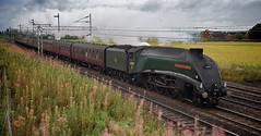 Streaking through Cheshire (wwatfam) Tags: gresley a4 pacific steam locomotive trains railways railroad express passenger train excursion crewe chorlton cheshire england britain transport streamlined