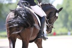 _MG_9413 (dreiwn) Tags: dressurprüfung dressurreiten dressurpferd ridingarena reitturnier reiten reitplatz reitverein reitsport ridingclub equestrian horse horseback horseriding horseshow pferdesport pferd pony pferde tamronsp70200f28divcusd dressur dressuur dressyr dressage