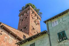 Tour Guinigi (croqlum) Tags: brick italy europe urbaine voyage urban italia brique luccas toscane tower arbre tour tree toscana luques italie architecture