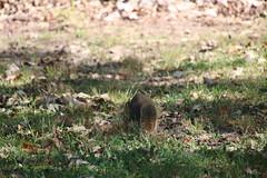 Squirrels at Royal Oak Arboretum & Quickstad Park (Tenhave Woods Nature Center) - September 15th, (Royal Oak, Michigan) (cseeman) Tags: squirrels foxsquirrels blacksquirrels easterngreysquirrels wildlife animals trees michigan royaloak parks publicparks arboretum royaloakarboretum quickstadpark tenhavewoodsnaturecenter naturecenter tenhavewoods oaklandcounty