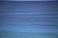 IMG_3588 (gervo1865_2 - LJ Gervasoni) Tags: surfing with whales lady bay warrnambool victoria 2017 ocean sea water waves coast coastal marine wildlife sealife blue photographerljgervasoni