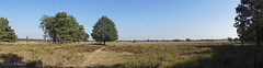 Doldersummerveld (♥ Annieta ) Tags: annieta september 2018 sony a6000 nederland netherlands drente zorgvlied doldersummerveld heide hei bomen trees field hay allrightsreserved usingthispicturewithoutpermissionisillegal