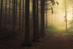 In the Forest (Netsrak) Tags: baum bäume europa europe landschaft natur nebel wald fog landscape mist nature tree trees woods eifel eu rheinbach nordrheinwestfalen deutschland de