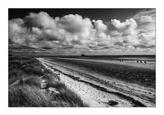 Entre Dunes et Plage de Genêts-Dragey (Marie 35 (140)) Tags: dunes plage drageyrothon bassenormandie littoral ambiance nb paysage ciel chevaux montstmichel baiedumont