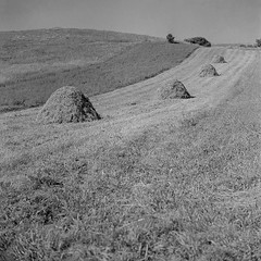 Haystacks (Bernád Rozália) Tags: yashicamat124g fomapan100 fomadonr09 epsonv700 film analoque scan selfdeveloped summer haystacks transylvania