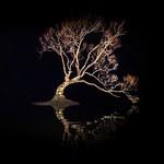 That Wanaka Tree-16 thumbnail