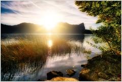 Schilf (Karl Glinsner) Tags: landschaft landscape österreich austria oberösterreich upperaustria salzkammergut outdoors see lake schilf reed wasser water sonnenuntergang sunset abend evening mondsee