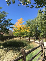 September 15, 2018 - A hint of fall colors in Thornton. (LE Worley)